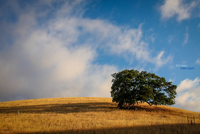 A Tree, a Hill, and Some Clouds
