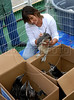 "Giselda Candiotti, director of Niteroi Zoo, checks magellanic penguins (Spheniscus magellanicus) rescued off the coast of Rio de Janeiro before to be transported by the Brazilian Oceanographic Navy ""Ary Rongel"" and freed in southern Brazil, Rio de Janeiro, Brazil, October 6, 2008. The magellanic penguins migrate annually to the Argentinian and Uruguayan coast during their migration from Patagonia in July, and large numbers end up on Rio de Janeiro's beaches every year, swept by strong ocean currents from the Strait of Magellan. This year is seeing higher numbers and more dead penguins than usual; more of 150 penguins have been treated by veterinarians at the Zoo this year and over 400 baby penguins have been found dead on the state's shores over the past two months. Penguins will transported by boat and freed in southern Brazil in September when the southern hemisphere Spring arrives. The species is classified as ""Near Threatened,"" primarily due to the vulnerability of large breeding colonies to oil spills, which kill 20,000 adults and 22,000 juveniles every year off the coast of Argentina. The decline of fish populations is also responsible, as well as predators such as sea lions and giant petrels, which prey on both the chicks and the adults. (Austral Foto/Renzo Gostoli)"