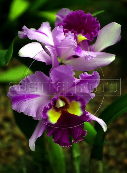 Orchid's Expo at Jardim Botanico (Botanic Garden), Rio de Janeiro, Brazil, May 4, 2002. (Austral Foto/Renzo Gostoli)