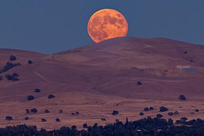 2013 Harvest Moon