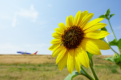 072121_airfield_nature-003