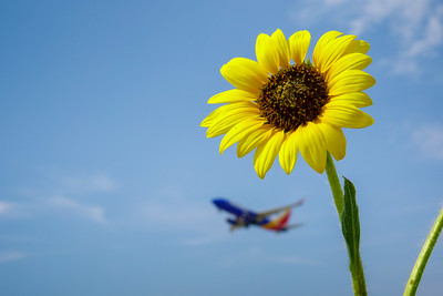 072121_airfield_nature-009