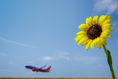 072121_airfield_nature-011