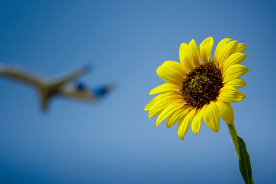 072121_airfield_nature-008