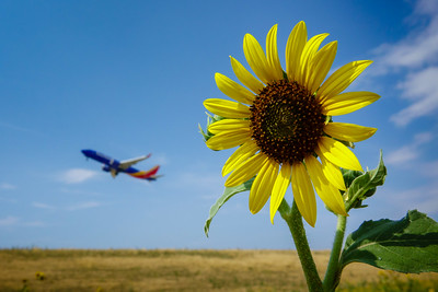 072121_airfield_nature-005