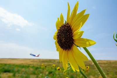 072121_airfield_nature-002