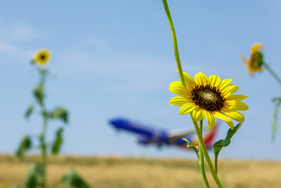 072121_airfield_nature-012