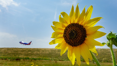 072121_airfield_nature-001