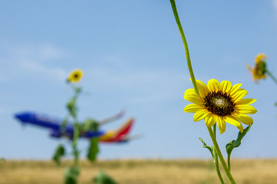 072121_airfield_nature-013