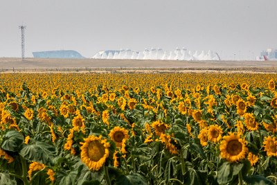 081021_tents_nature_sunflowers-200