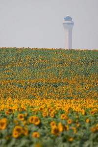 081021_faa_tower_nature_sunflowers-173