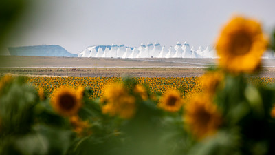 081021_tents_nature_sunflowers-314