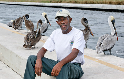 011514 - BOYNTON BEACH - Gerard Laurore, Ocean Inlet Park live-in, photographed with brown pelicans at Ocean Inlet Park.  Photo by Tim Stepien