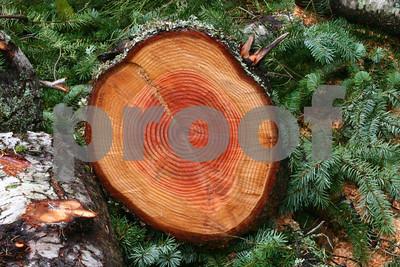 Firewood 6354