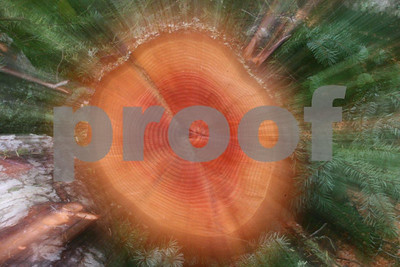 Firewood 6348