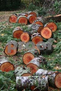 Firewood 6342