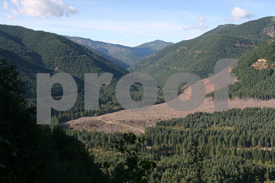 Series #4: New clear cutting on the North Fork Kalama River taken on October 11, 2008.