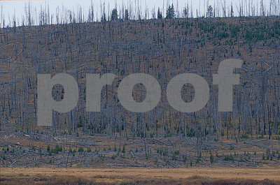 Yellowstone National Park, aftermath of the September 1988 fire as seen on September 26, 2002