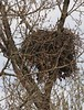 Bald eagle nest 3285c
