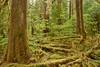 SF Skok, forest floor  7720_HDR