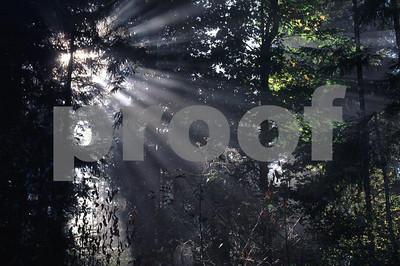 Sun rays forest  2
