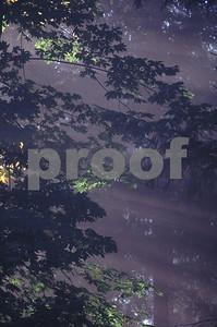Sun rays forest  3