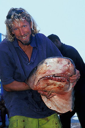the snaggle-toothed predator seems to leer as it holds its victims head in its hands, fisherman poses with head of tiger shark, Galeocerdo cuvier, after it has been finned. Kona, Hawaii ( Central Pacific Ocean )