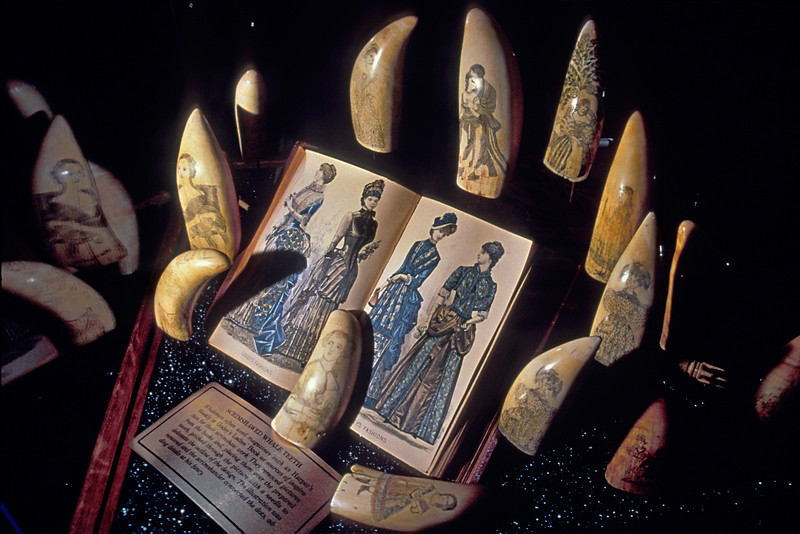 Examples of scrimshaw, the etching of artwork into the teeth of sperm whales during the days of whaling in the United States.