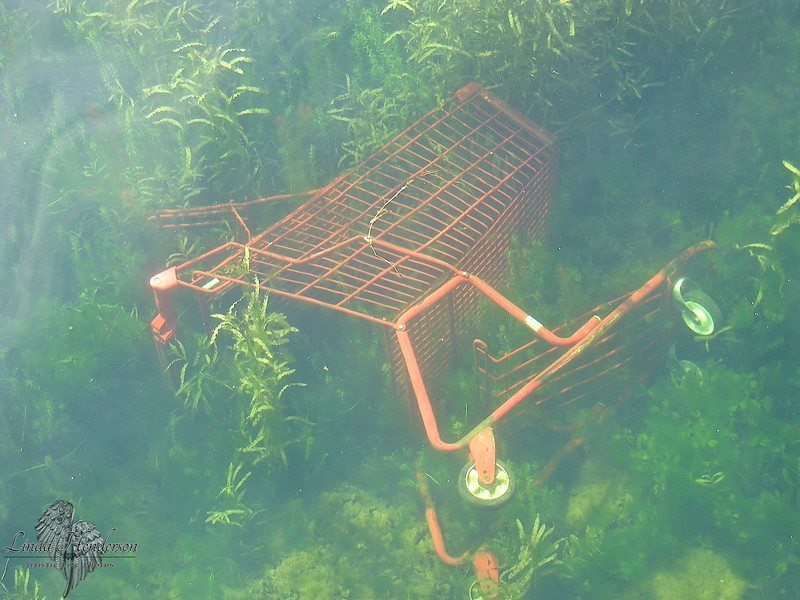 Shopping Cart Thrown Into Marina In Kingston