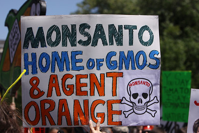 10 farmers a day are committing suicide in India because of GMO engineered seeds from Monsanto. http://www.huffingtonpost.com/vandana-shiva/from-seeds-of-suicide-to_b_192419.html