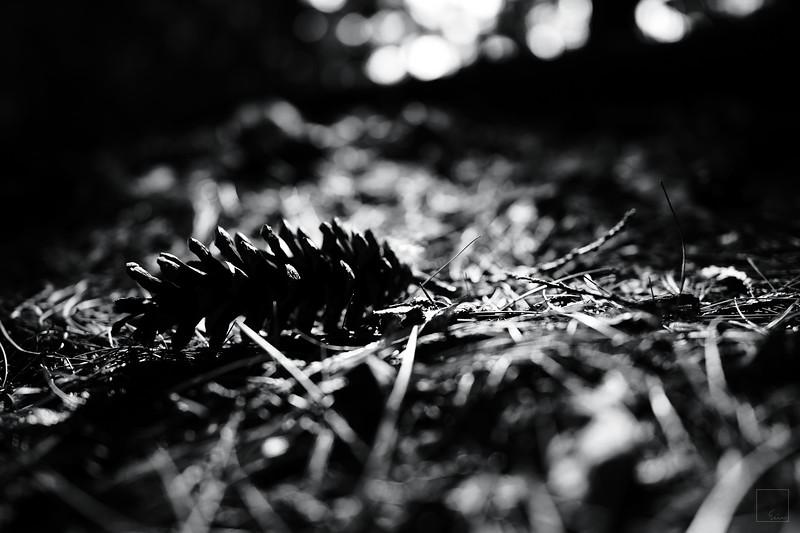 Nature's litter