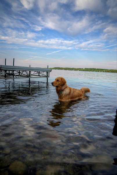Ginger, on Sturgeon Lake, Ontario, 10 June 2012.