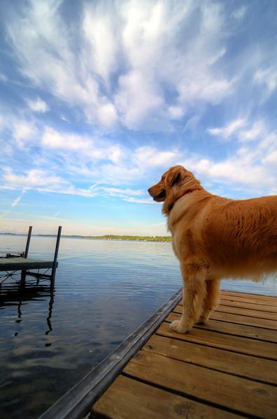 Ginger, on Sturgeon Lake, Ontario, 10 June 2012.