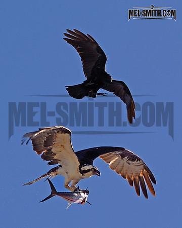 Epic Avian Battle
