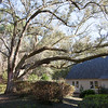 TREE BEHIND CHAPEL IMG_5379