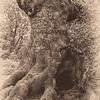 S5 Graffiti Tree, High Beech