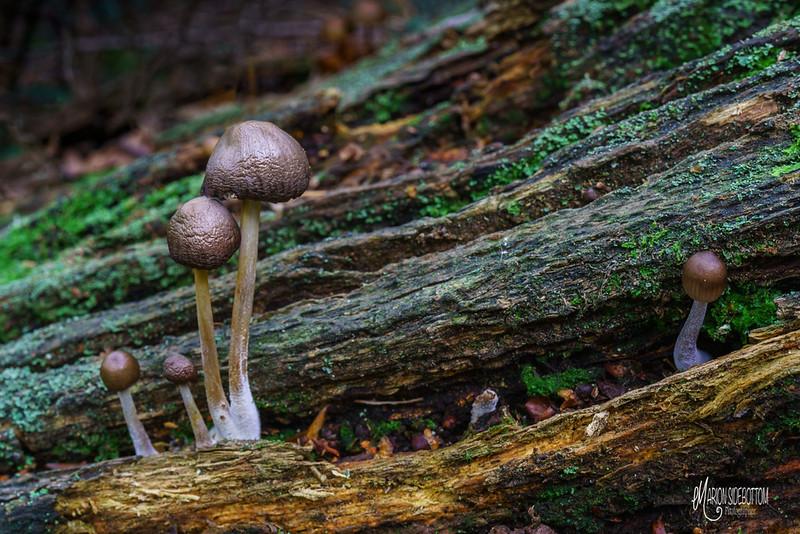 B14 Oak Decay Fungi