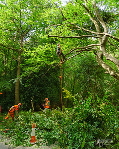 20 Conservation Arborists at High Beach (c) Marion Sidebottom