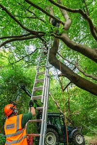 08 Conservation Arborists at High Beach (c) Marion Sidebottom