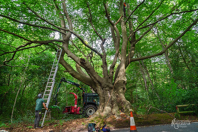 07 Conservation Arborists at High Beach (c) Marion Sidebottom
