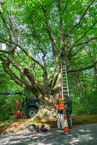 05 Conservation Arborists at High Beach (c) Marion Sidebottom