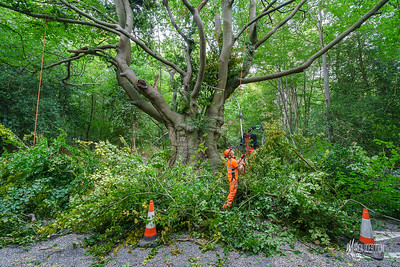 19 Conservation Arborists at High Beach (c) Marion Sidebottom