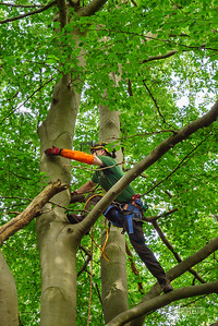 06 Conservation Arborists at High Beach (c) Marion Sidebottom