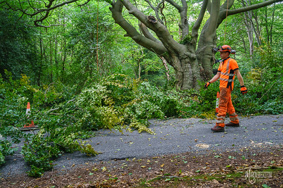 13 Conservation Arborists at High Beach (c) Marion Sidebottom