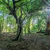 Jeremy's favourite crab apple tree at Barn Hoppitt