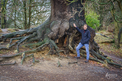 Jeremy with an ancient oak at Barn Hoppitt, he has written about the solitary bees which live around its roots