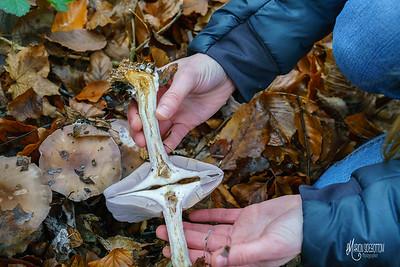 22 Mycologist (c) Marion Sidebottom