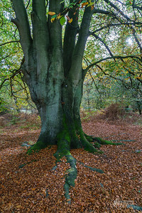 15 FSC Woodland Ecology (c) Marion Sidebottom