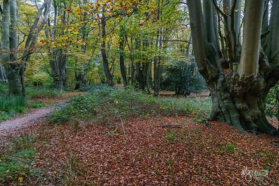 12 FSC Woodland Ecology (c) Marion Sidebottom