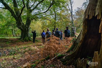 09 FSC Woodland Ecology (c) Marion Sidebottom